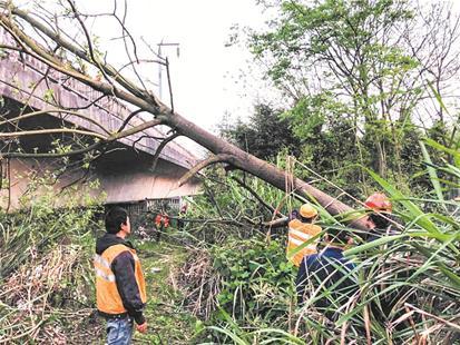 村民铁路边砍树逼停京广高铁 导致28趟高铁晚点 被行政拘留7天